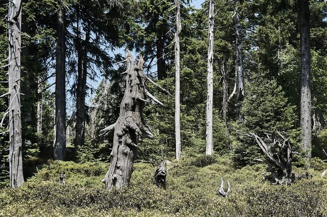 <a href='https://harz-kompakt.de/rundwanderung-radau-brocken/' target='_blank'>Goethemoor</a>